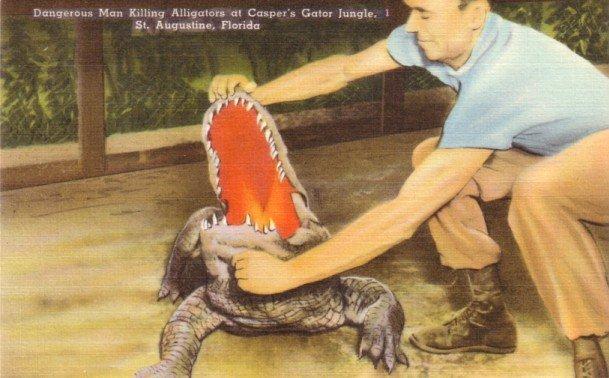 Alligators at Casper's Gator Jungle in St Augustine Florida FL, Linen Postcard - 3142