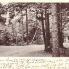 View of Forest Park at Springfield Massachusetts MA, 1907 Vintage Postcard - 3413