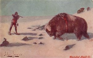 Wounded Musk Ox Artist Signed by John Innes Vintage Postcard - 3883