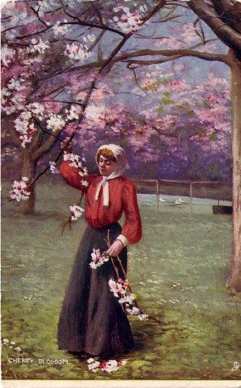 Woman Picking Cherry Blossoms, Raphael Tuck & Sons, 1906 Vintage Postcard - 3896