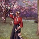 Woman Picking Cherry Blossoms, Raphael Tuck & Sons, 1906 Vintage Postcard - 3896