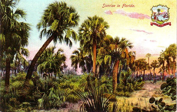 Sunrise in Florida FL, Vintage Postcard - 4011