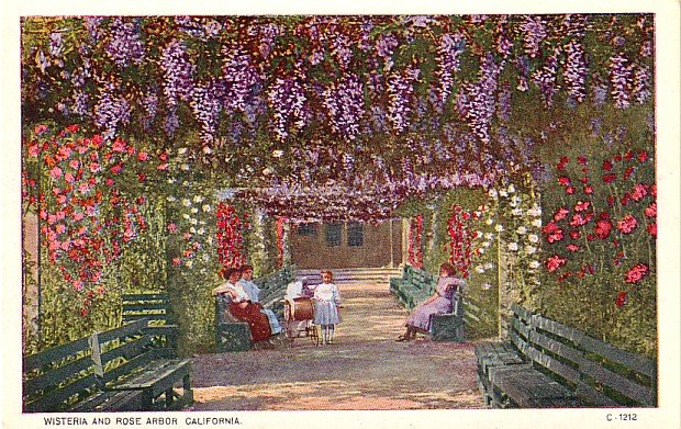 Wisteria and Rose Arbor in California CA, Vintage Postcard - 4027