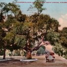 Orange Grove Avenue, Pasadena California CA, Edward H Mitchell 1908 Vintage Postcard - M0001