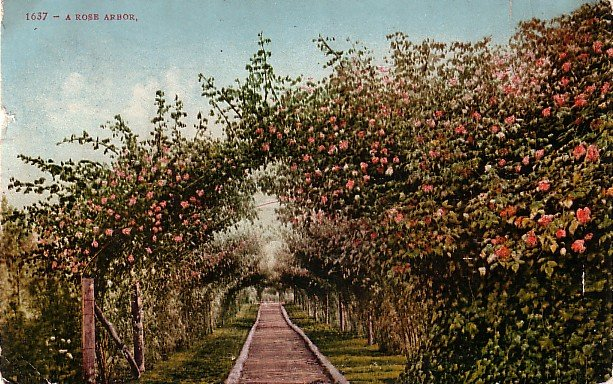 A Rose Arbor, Edward H Mitchell 1909 Vintage Postcard - M0020
