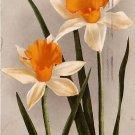 Daffodils, Edward H Mitchell 1909 Vintage Postcard - M0036