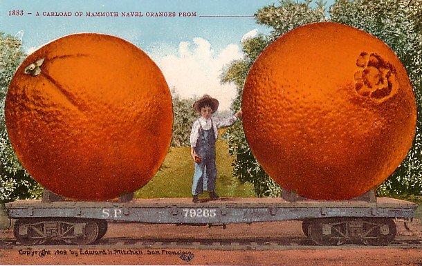 A Carload of Mammoth Navel Oranges, Edward H Mitchell 1910 Vintage Postcard - M0063