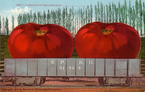 A Carload of Tomatoes, Edward H Mitchell 1910 Vintage Postcard - M0075