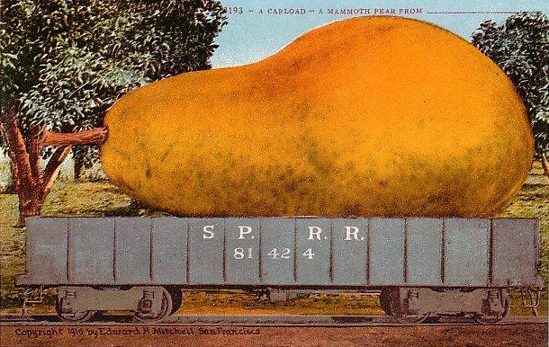 A Carload of Mammoth Pear, Edward H Mitchell 1910 Vintage Postcard - M0080