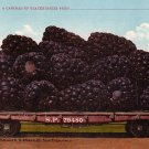 A Carload of Blackberries, Exaggerated Edward H Mitchell 1910 Vintage Postcard - M0081