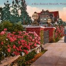 Rose Bordeered Sidewalk in Pasadena California CA,  Edward H Mitchell 1910 Vintage Postcard - M0106