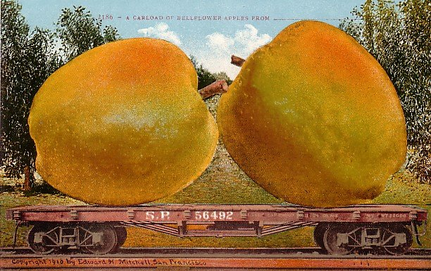 A Carload of Bellflower Apples, Exaggerated Edward H Mitchell 1910 Vintage Postcard - M0107