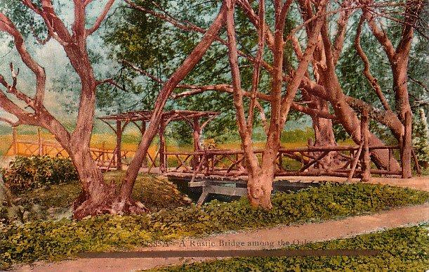 A Rustic Bridge Among the Oaks, Edward H Mitchell 1910 Vintage Postcard - M0117