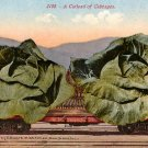 A Carload of Cabbages, Exaggerated Edward H Mitchell 1911 Vintage Postcard - M0131