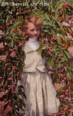 Cherries are Ripe, Edward H Mitchell 1911 Vintage Postcard - M0218