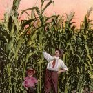 Corn as it Grows in the Great Northwest, Edward H Mitchell 1911 Postcard - M0219