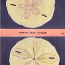 Florida Sand Dollar, Linen Postcard - 4096