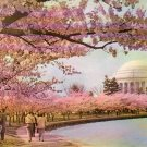Cherry Blossom Time at Jefferson Memorial in Washington DC, Chrome Postcard - 4195