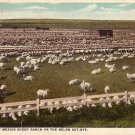 Sheep Ranch on the Belen Cut Off in New Mexico NM, Fred Harvey Postcard - 023 NJ