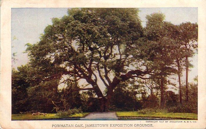 Powhatan Oak on Jamestown Exposition Grounds, 1907 Vintage Postcard - 4357