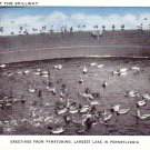 Ducks at Spillway of Pymatuning Lake in Pennsylvania PA Vintage Postcard - 4662