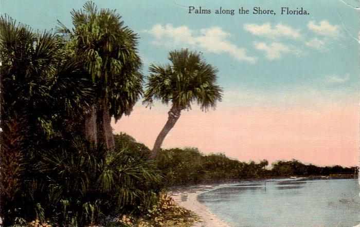 Palms along the Florida FL Shore, 1914 Vintage Postcard - 4853