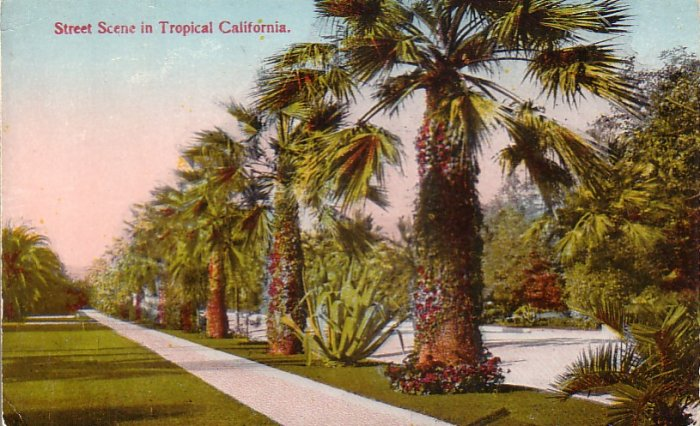 Street Scene in Tropical California CA Vintage Postcard - 4874