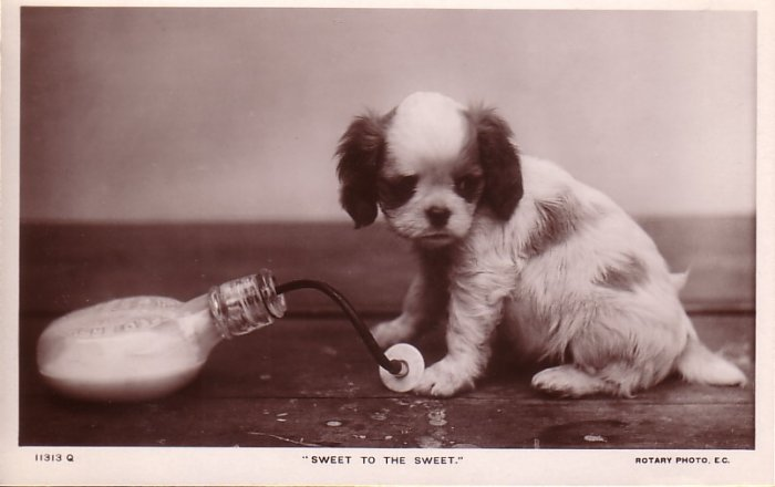 Puppy with Bottle, Rotary Photographic Real Photo Post Card RPPC - 5076