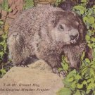 Mr. Ground Hog the Original Weather Prophet Linen Postcard - 5140