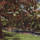 Duck Lake in forest Park St. Louis Missouri Mid Century Linen Postcard - 5157