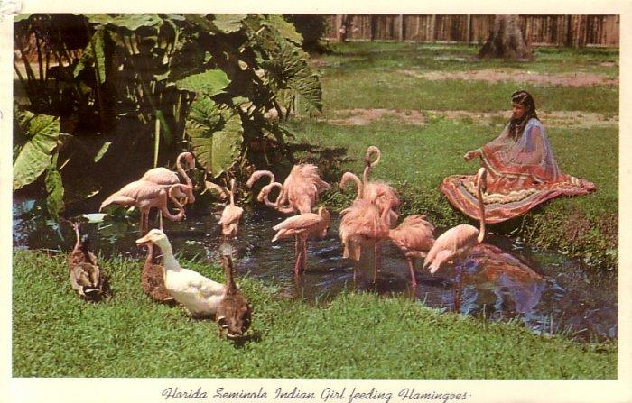 Seminole Indian Girl Feeding Flamingoes in Florida FL 1967 Chrome Postcard - 5229