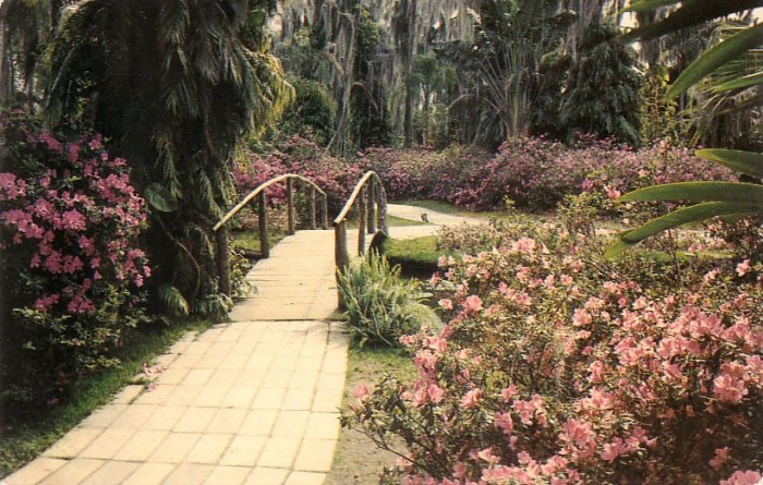 Foot Bridge in Florida FL Cypress Gardens Chrome Postcard - 5242