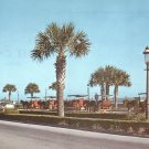 Sightseeing Carriages in St. Augustine Florida FL, Chrome Postcard - 5245