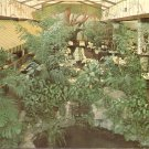 Garden Cafeteria in St. Petersburg Florida FL Chrome Postcard - 5250