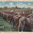 Horses at Camp Dix New Jersey NJ Vintage Postcard - 3954