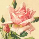 Victorian Flowers 900 vintage images on CD roses floral