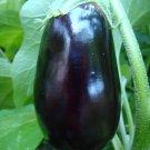 50 Black Beauty Eggplant Seeds