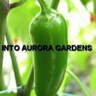 50 Jalapeno Pepper Seeds HOT & ZESTY Organic Vegetable