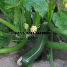25 Black Beauty Zucchini Seeds Organic Heirloom