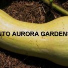 25 Waltham Butternut Winter Squash Organic Seeds
