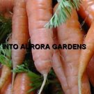 100 Carrot Red Cored Chantenay Organic Heirloom Seeds
