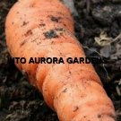 100 Carrot Little Finger Seeds Baby Vegetable Container