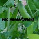 25 Pea Green Arrow Heirloom Seeds Vegetable Gourmet
