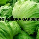 100 GREEN ICEBERG LETTUCE SEEDS HEIRLOOM ORGANIC SALAD