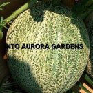 50 Cantaloupe Hales Best Jumbo Melon Heirloom Seeds