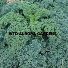 100  Kale Vates Blue Curled Organic Seeds