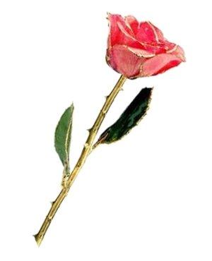 Rose - 24Kt Gold - Pink