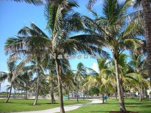 South Beach Palms 16x20