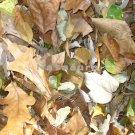 Fall Leaves 8x10