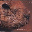 Butthole Surfers - Pepper - UK  CD Single